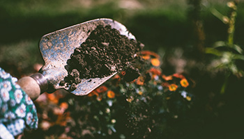 Person digging on soil using garden trowel © Lisa Fotios