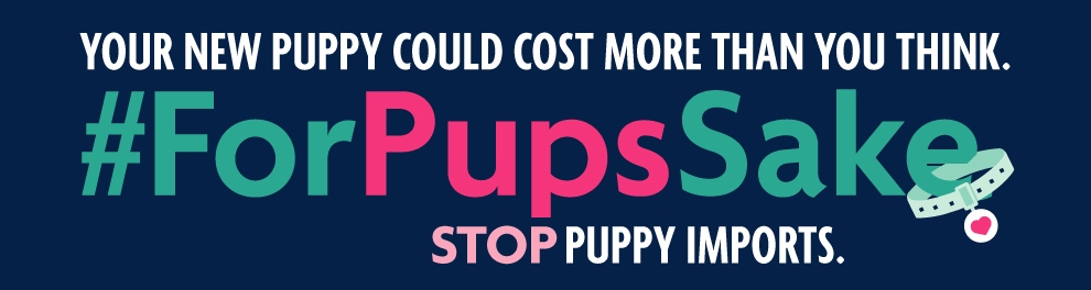 Stop puppy imports © RSPCA