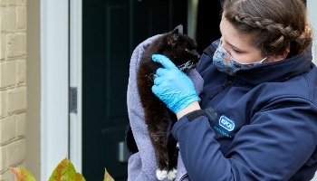 Cat rescued by RSPCA © RSPCA