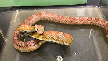 Snake found in taxi cab