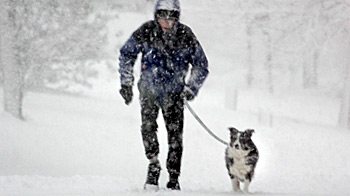 Man walking dog in park as snow falls © Andrew Forsyth / RSPCA Photolibrary
