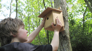 Boy putting up bird nest box © Andrew Forsyth/RSPCA Photolibrary