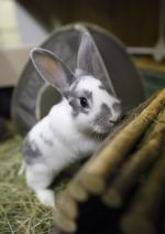 Rabbit with hiding places © Andrew Forsyth / RSPCA Photolibrary