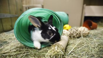 Rabbit Advice, Tips and Health Information | RSPCA