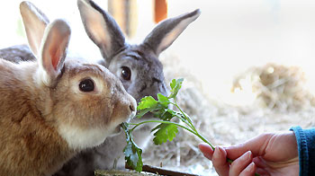 What can rabbits eat? Rabbit diet myths | RSPCA