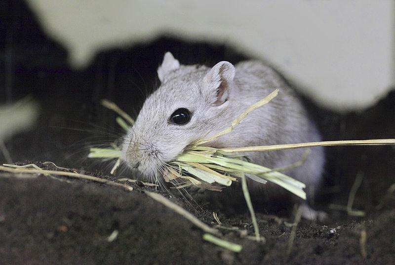 Gerbil environment | Gerbils | Our pets