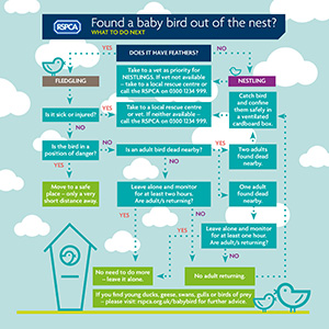 A visual guide to helping baby birds © RSPCA