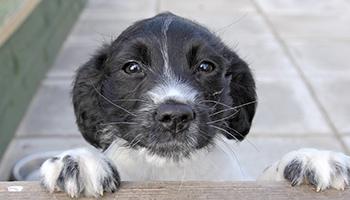 2dd11b5d71f5 Sponsor our dog kennels