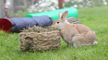 What Can Rabbits Eat Rabbit Diet Myths Rspca