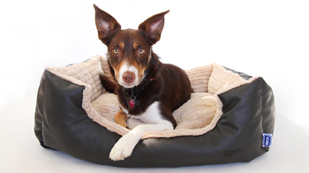 CP Designs dog bed © CP Designs