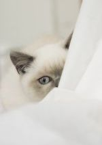 Cat hiding © Andrew Forsyth / RSPCA Photolibrary
