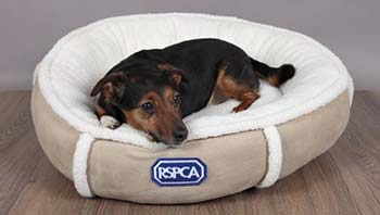 Coco in a small dog bed from the RSPCA shop