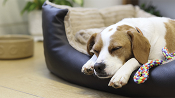 Dog asleep in dog bed © RSPCA