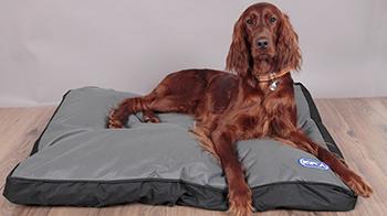 Dog lying on RSPCA dog bed © RSPCA