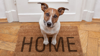 Rehome Or Adopt A Rescued Pet Rspca