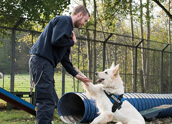Dog being trained at RSPCA centre © RSPCA