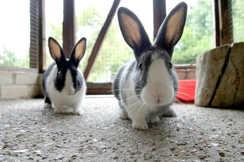 Advice on rabbit vaccinations & health | RSPCA