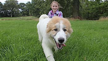 Happy dog and child running through field