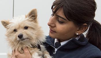Latest Animal Welfare News, TV Shows & Publications   RSPCA