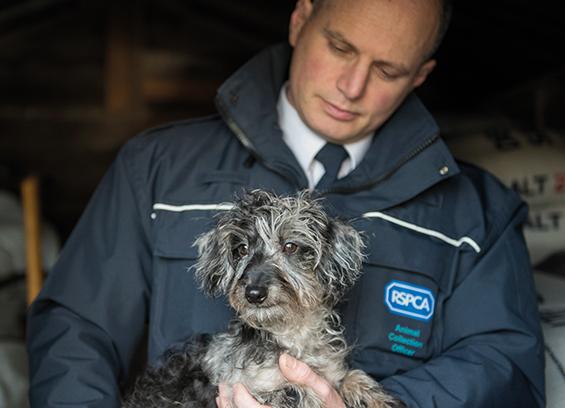 RSPCA Animal Collection Officer holding dog © RSPCA