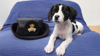 Abandoned puppy Little Bob © RSPCA