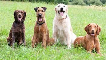 Dogs love walkies!