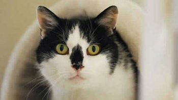 Mindy the cat © RSPCA