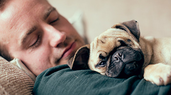 Pug sleeping on owners chest © RSPCA