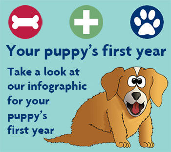 Your puppy's first year infographic © RSPCA