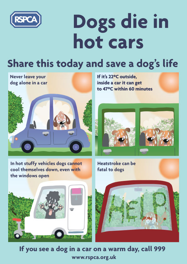 Dogs die in hot cars - share this today and save a dog's life. If you see a dog in a car on a warm day, call 999.