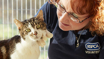 RSPCA volunteer cat cuddler with cat © RSPCA