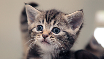 Cats and Cat Neutering, Health and Welfare | RSPCA