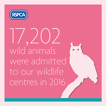 Wildlife admitted into our centres stats graphic © RSPCA
