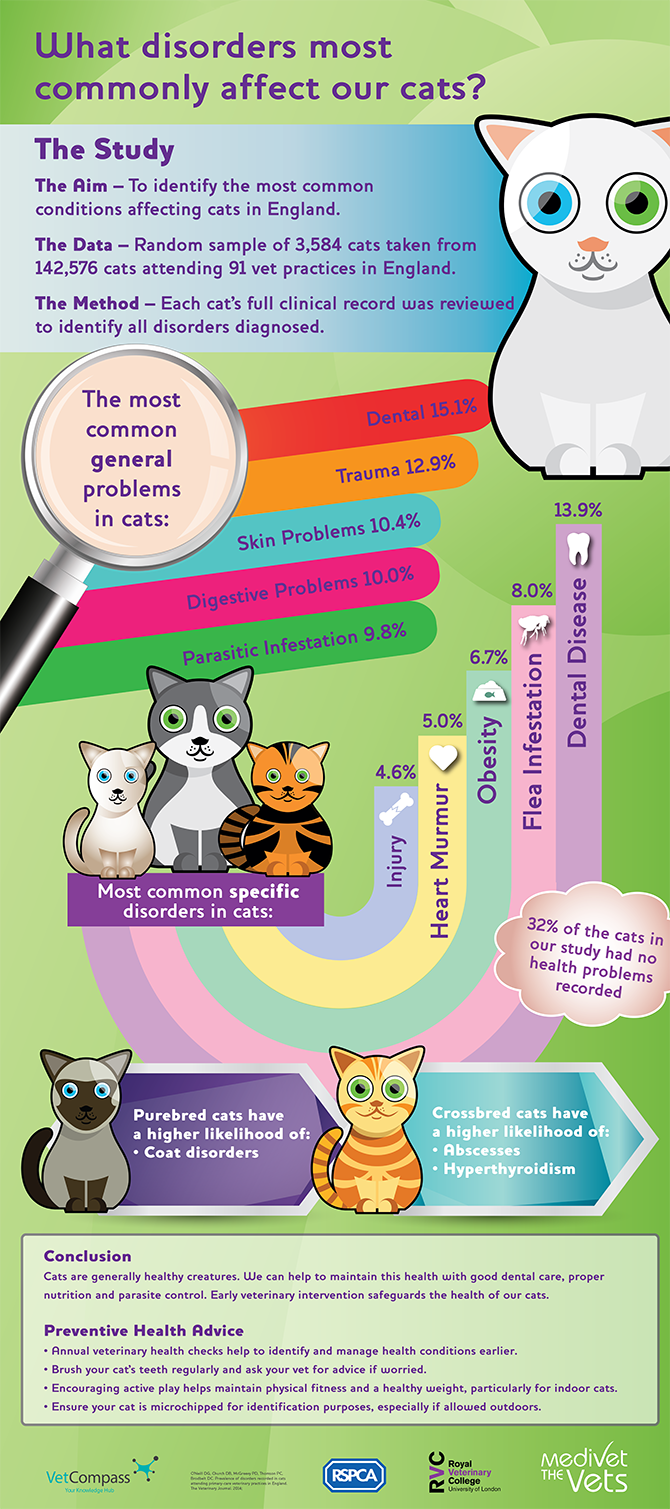Common cat illnesses infographic