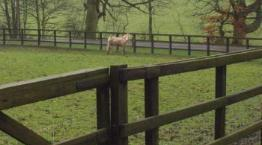 Felledge © RSPCA Equine Rehoming