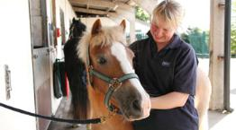 Groom Clare with horse Lulu © Andrew Forsyth/RSPCA Photolibrary