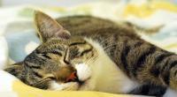 Cat sleeping © Leigh Hyland / RSPCA Australia