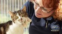 RSPCA volunteer cat cuddler © RSPCA