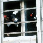 Dairy calves undergoing live export © RSPCA Photolibrary