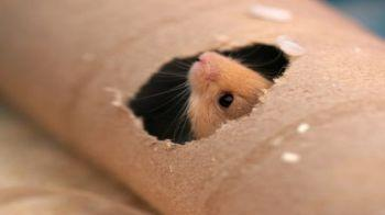 Mouse peeping through a hole in a cardboard tube © iStockphoto