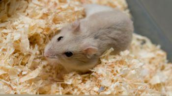 Hamster © iStockphoto