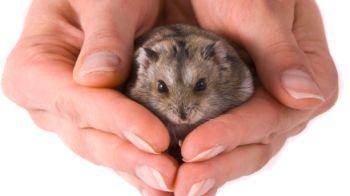 Hamster being held © iStockphoto