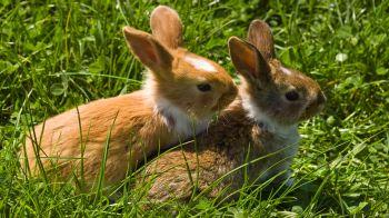 Two young rabbits on grass © Shutterstock