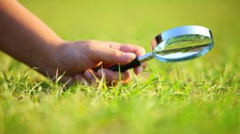 A hand holding magnifying glass over some grass © istockphoto/blackred