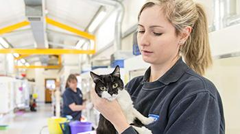 RSPCA Animal Care Assistant holding a cat © RSPCA