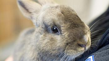 Rabbit being held © RSPCA