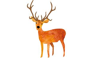 Illustration of a reindeer © RSPCA
