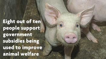 Eight out of ten people support government subsidies being used to improve animals welfare © RSPCA