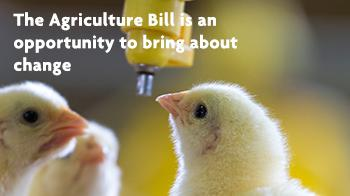 The Agriculture Bill is an opportunity to bring about change © RSPCA