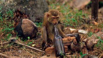 monkeytourism